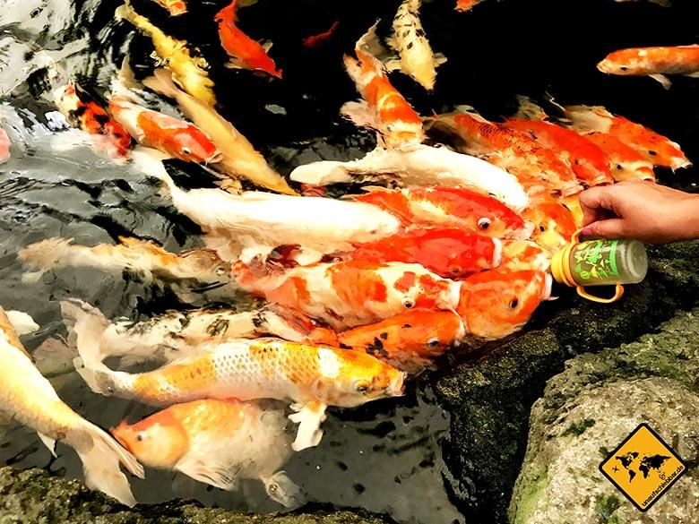 Underwater World Pattaya Koi Karpfen