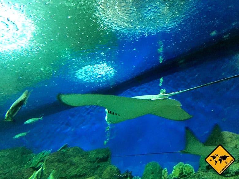 Underwater World Pattaya Mantarochen