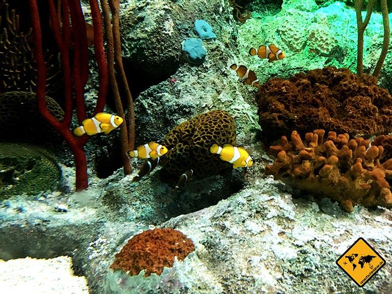 Underwater World Pattaya Nemo
