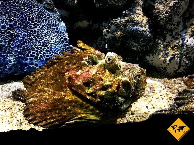 Underwater World Pattaya Steinfisch