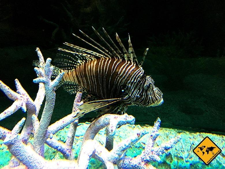 Underwater World Pattaya Tiefseebewohner