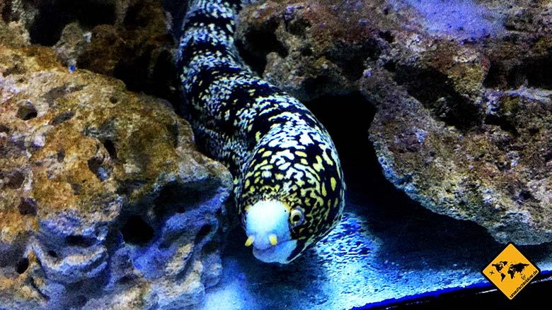 Underwater World Pattaya Wassermuräne