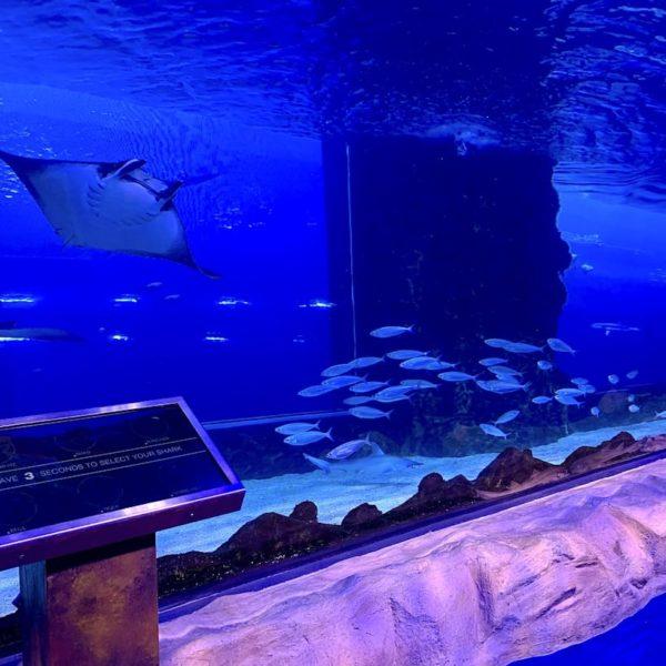 Underwater Zoo Dubai Aquarium