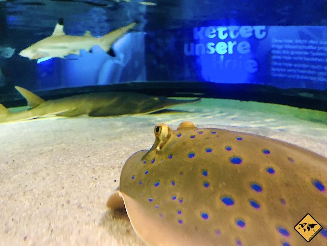 Unterwasserwelt Oberhausen
