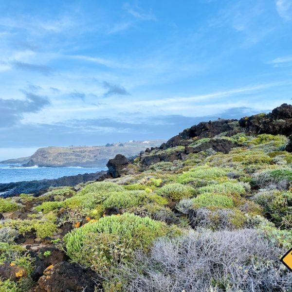 Vegetation Buenavista del Norte Teneriffa