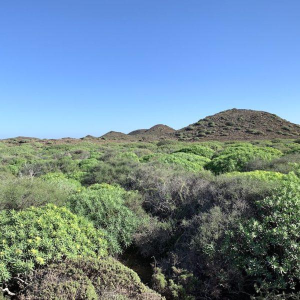Vegetation Isla de Lobos