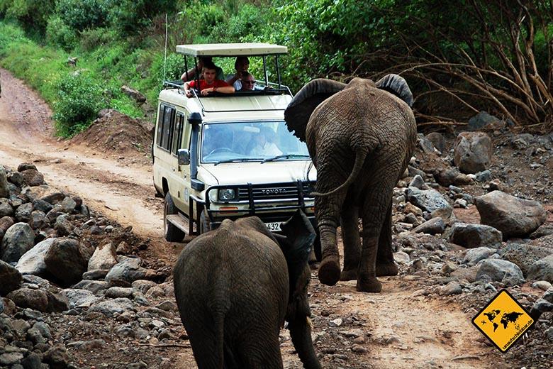 Visum Tansania Elefanten Safari
