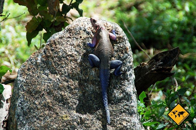 Visum Tansania Gecko