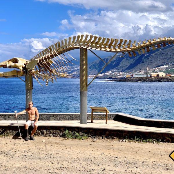 Wal-Skelett Teneriffa Los Silos Größe
