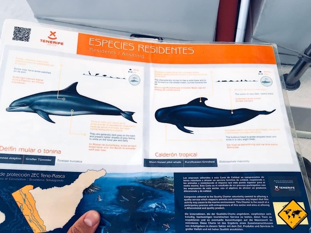 Walbeobachtung Teneriffa Arten