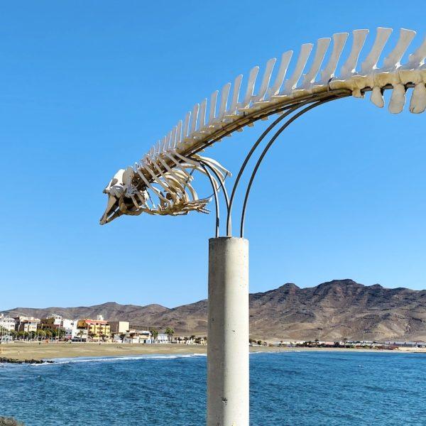 Walskelett Gran Tarajal Fuerteventura Geheimtipps