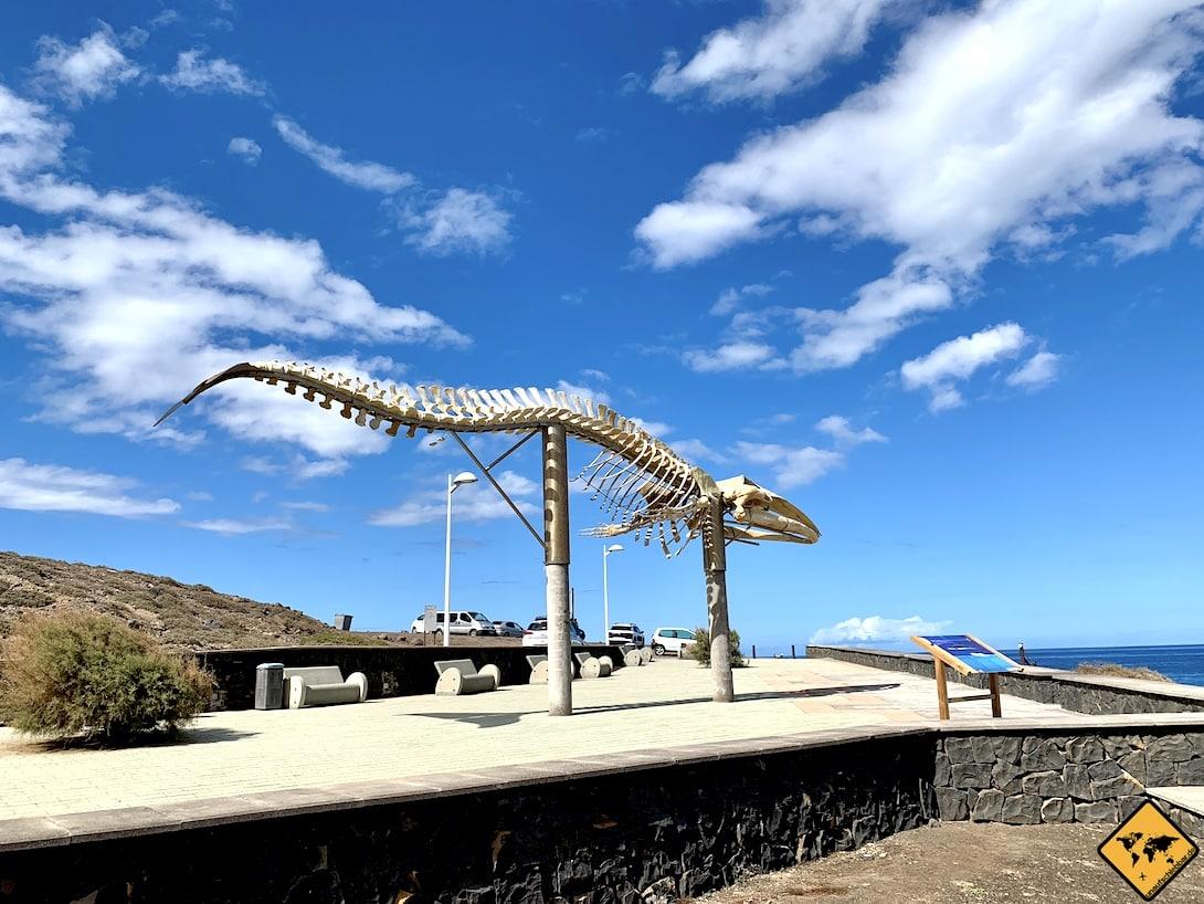 Walskelett nahe Punta de Teno Teneriffa