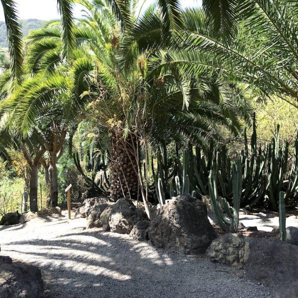 Weg Parque del Drago