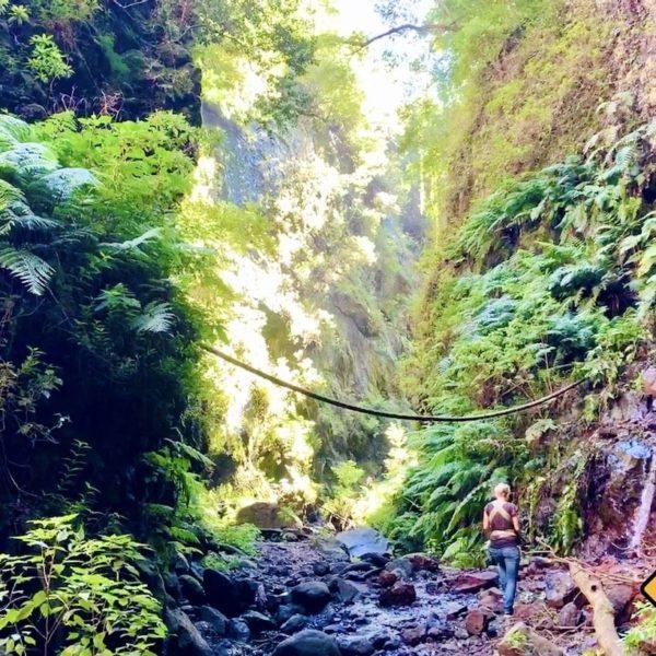 Weg Urwald La Palma