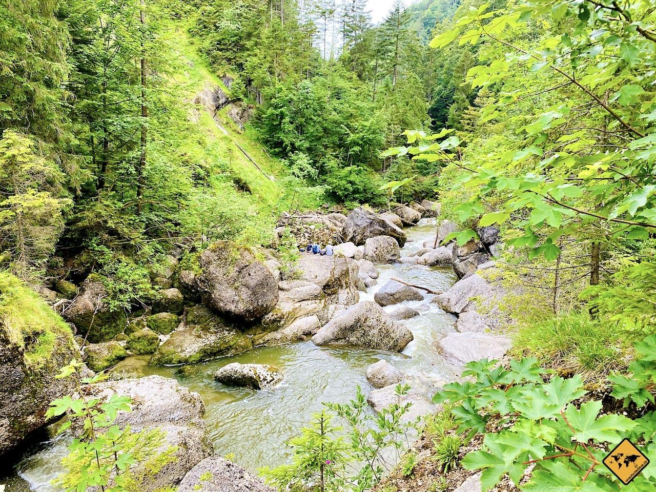 Weißach Natur Wald