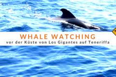 Whale Watching Teneriffa – Alle Infos, Preise + Erfahrungsbericht