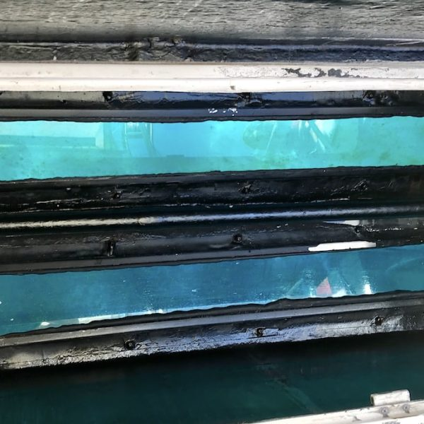 Whale Watching Teneriffa Glasboden