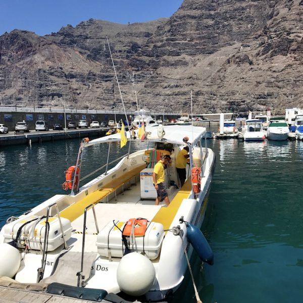 Whale Watching Teneriffa Motorboot Flipper Uno
