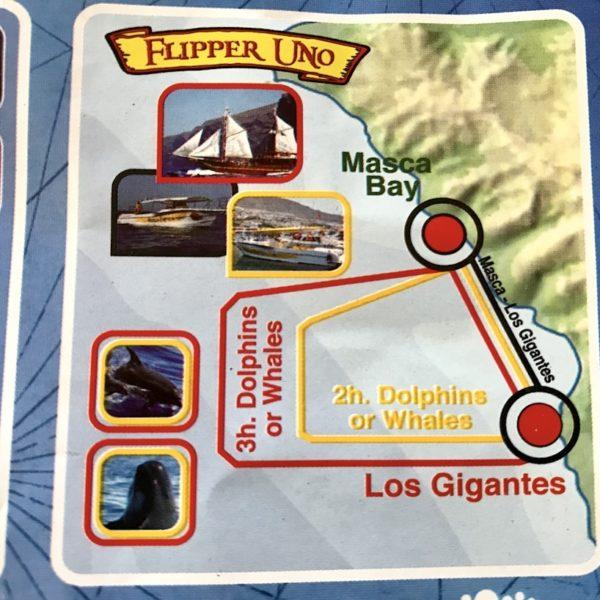 Von Flipper Uno werden zwei Whale Watching Touren angeboten: Eine kleinere, 2-stündige Tour (gelbe Linie) und eine größere, 3-stündige Tour (rote Linie)