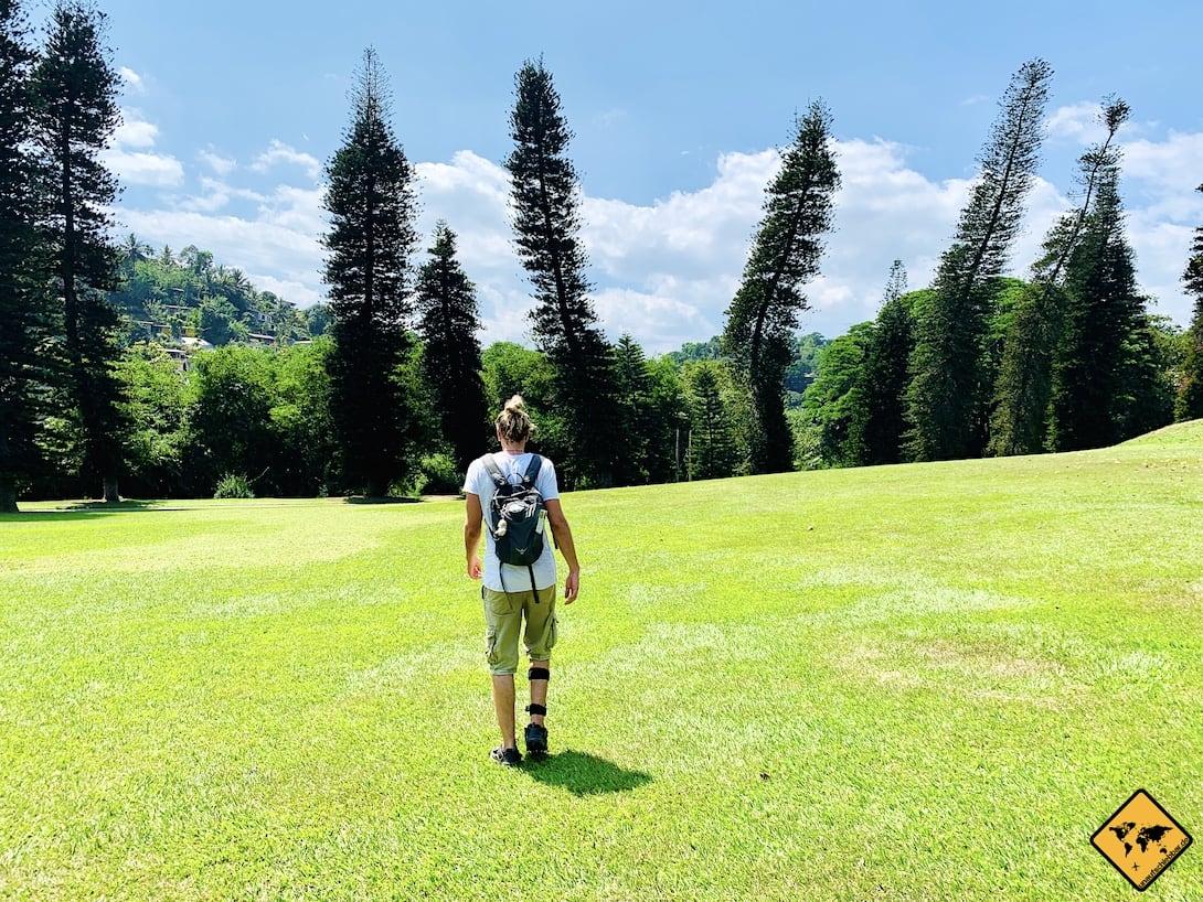 Wiese botanischer Garten Kandy