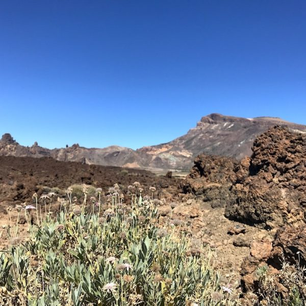 Zapato de La Reina Teide Nationalpark