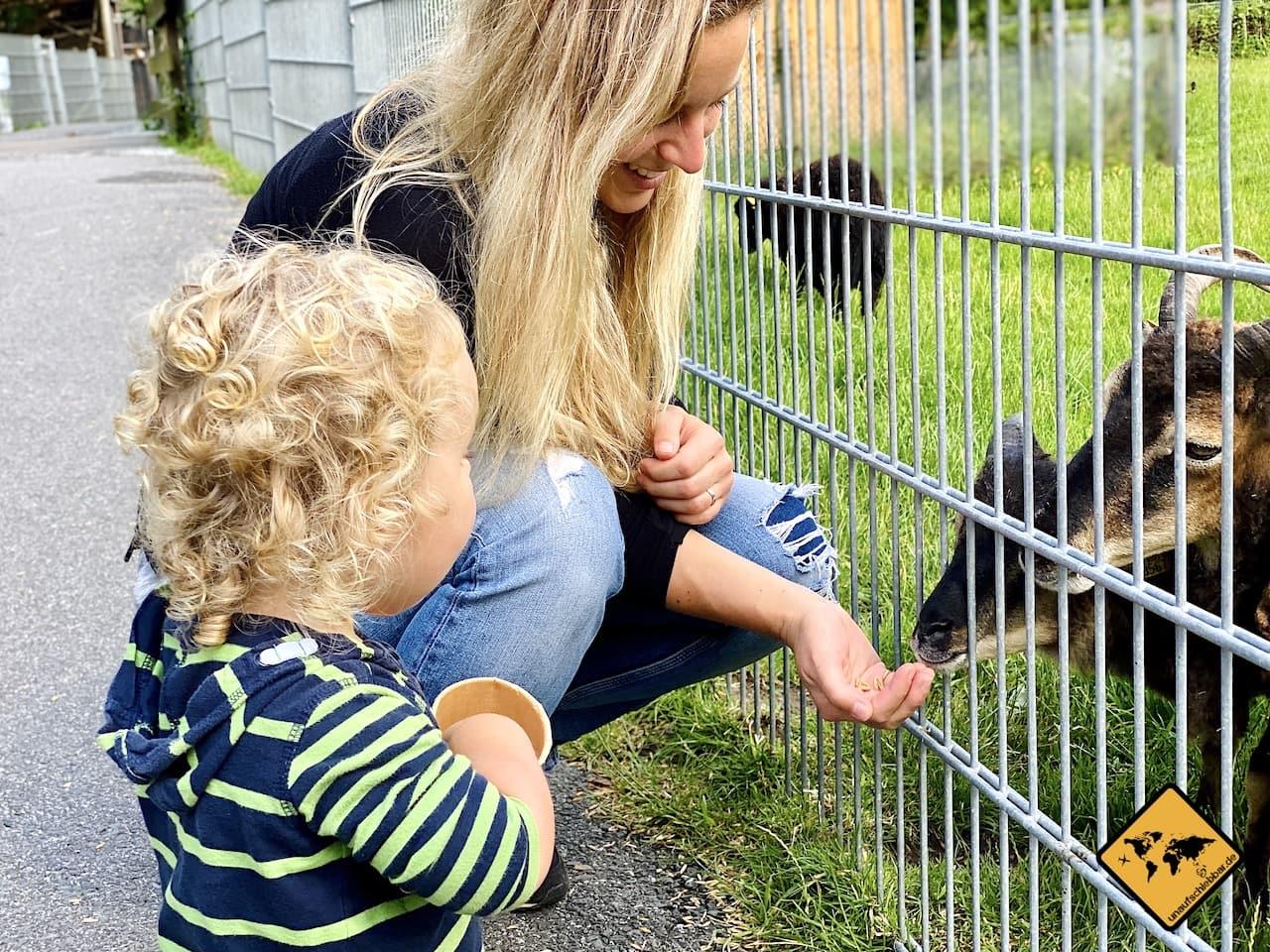 Zoo Werdum Tiere füttern