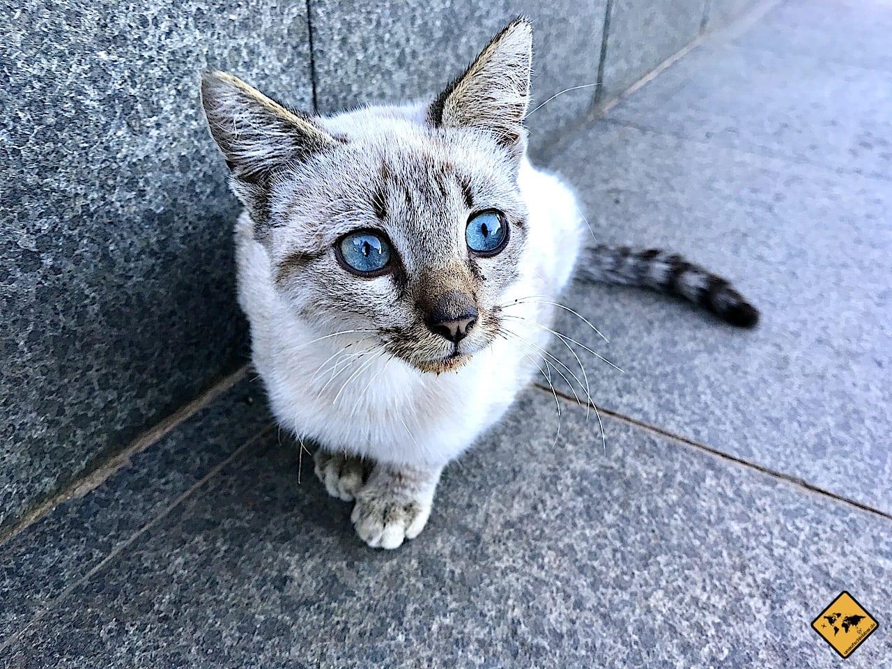 iPhone 7 Foto Katze